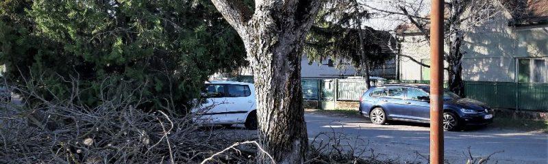 Gesztenyefa, mely nincs többé